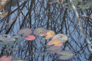 唐花見湿原にて 2006/11/03