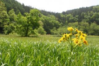 白馬村親海湿原 2007/05/26