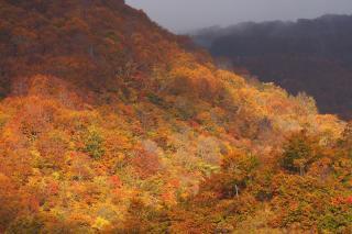 飯山市 なべくら高原 2007/10/28