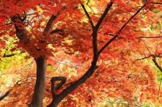 紅葉 長野市小丸山公園 2007/11/11