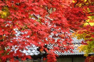 長野市小丸山公園