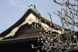 善光寺の春