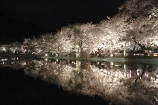 須坂市臥竜公園の夜桜