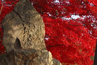 小丸山公園  2008/11/15