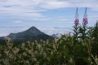 ヤナギランと笠岳