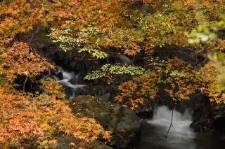 美麻 金熊川