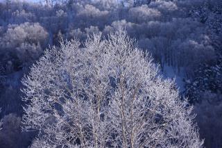 樹氷 志賀高原