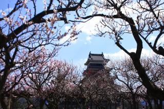 松本城 梅1