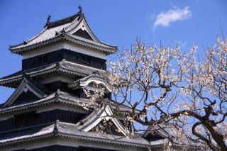 松本城 梅2