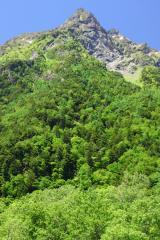 新緑の明神岳